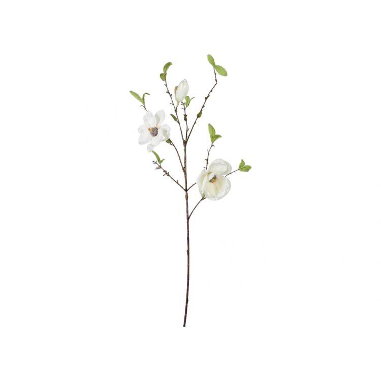 Magnolia Wit 85 cm