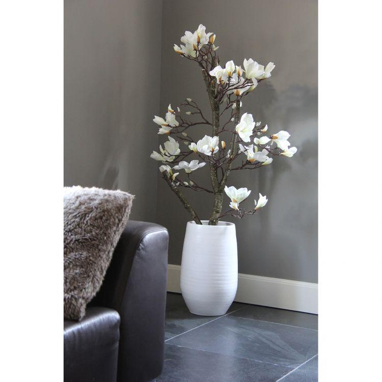 Wit Magnolia Boompje ± 150 cm (incl. pot)
