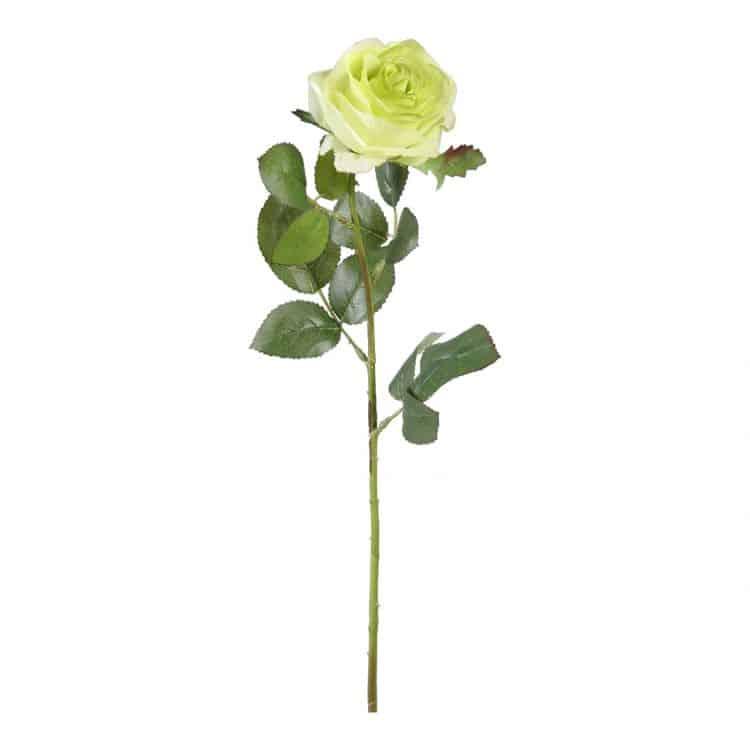 Roos op bladsteel Zachtgroen 65 cm