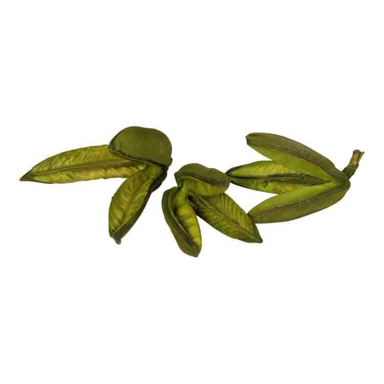 3 Sororoca vruchten Groen