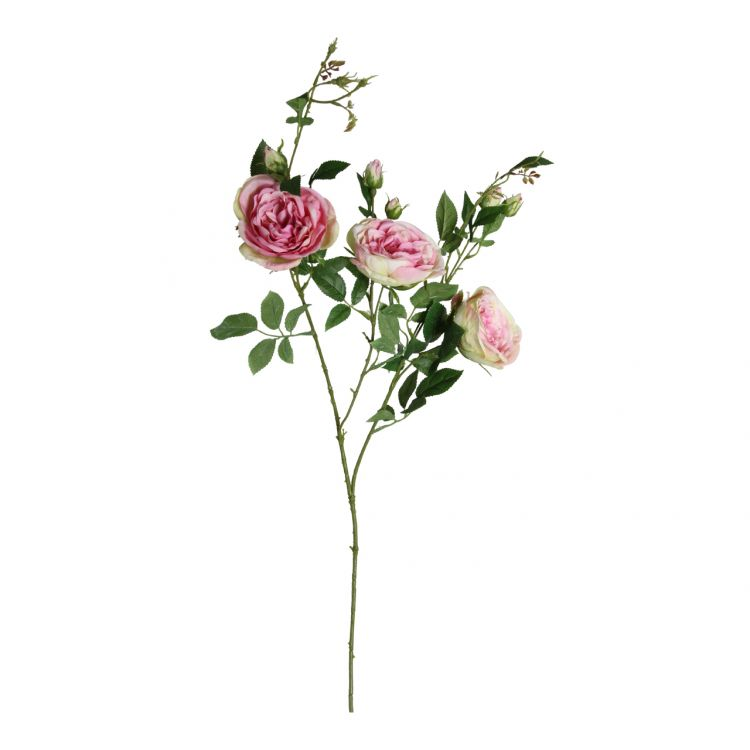 Wilde Roos Roze-Groen 100 cm