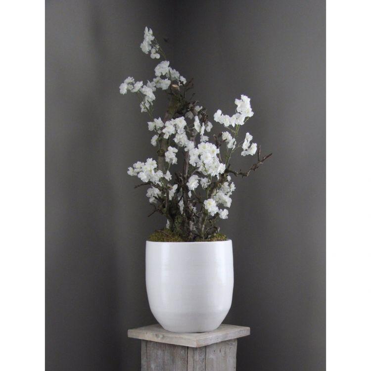 Wit Bloesemboompje ± 100 cm (excl. pot)